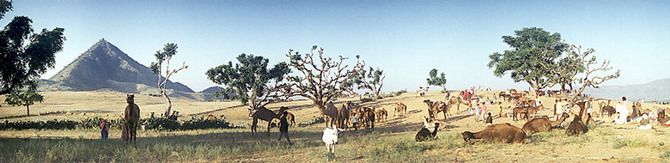 Pushkar Fair, Rajastan (1990)