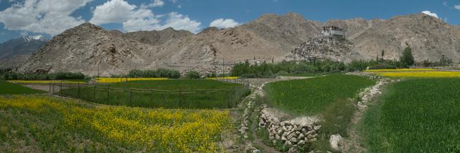 Chamrey gompa, July 2014