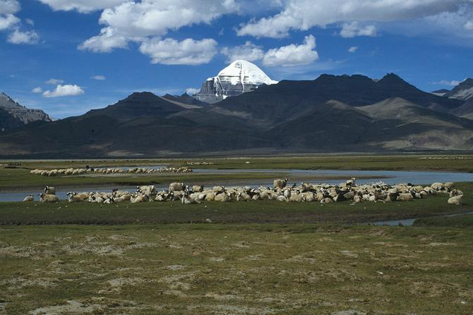 Herds at the foot of Mt Kailash, 1987